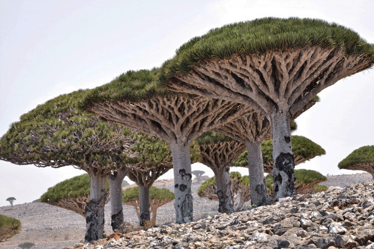 Socotra Islands, Yemen