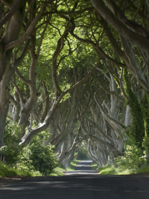 Dark-Hedges-1d